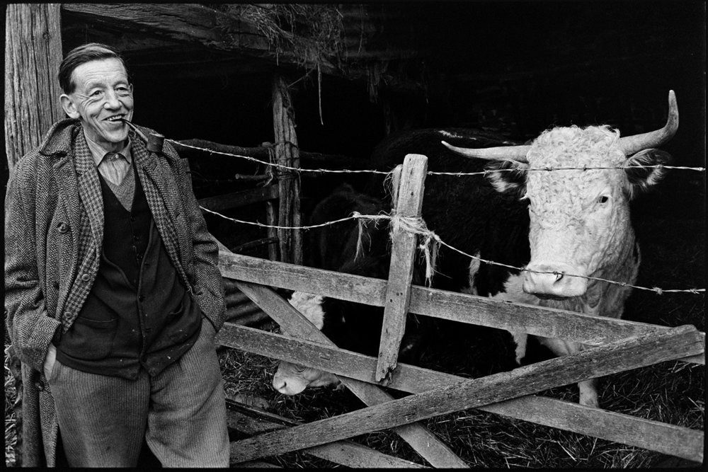 Bill Cooke posing with his cow, Riddlecombe, Colehouse, February 1975