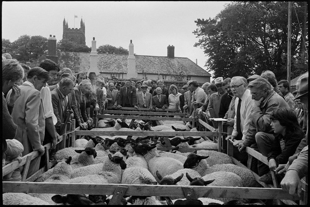 Sheep sale at fair, Chulmleigh, July, 1987