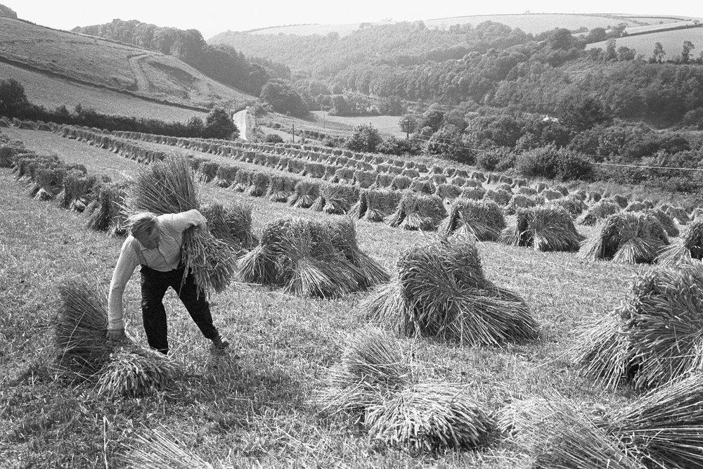 Wilf Pengelly setting up stooks, Woolleigh Barton, Beaford, Devon, 1974