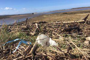 Plastic-on-estuary1-300x200.jpg
