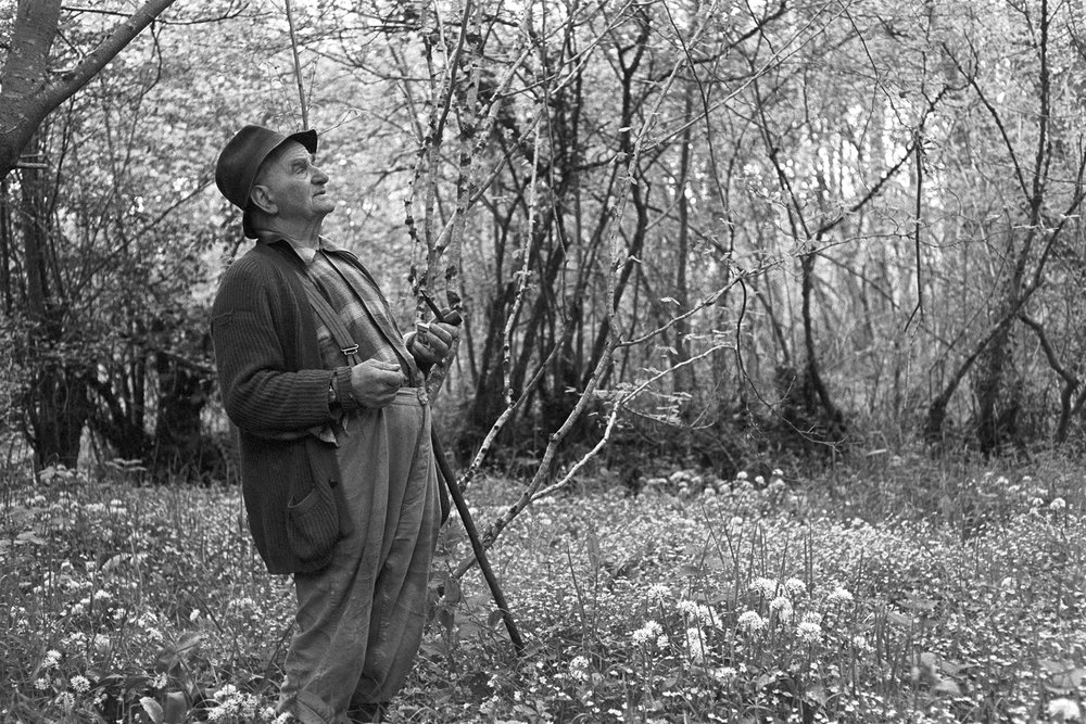 Archie Parkhouse in a wood near Dolton, Addisford, Dolton, June 1974