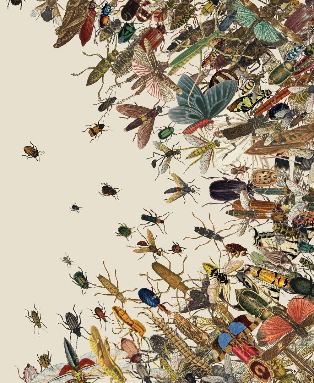 02mag-insects-image1-superJumbo-v3.jpg