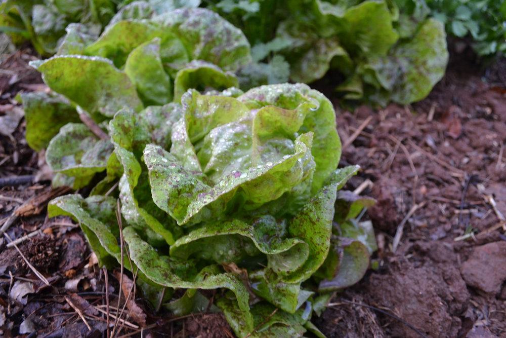 compost makes gardens happy -