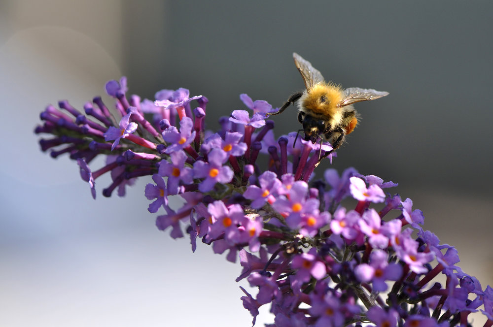 Every yard is an opportunity to nurture pollinators. -