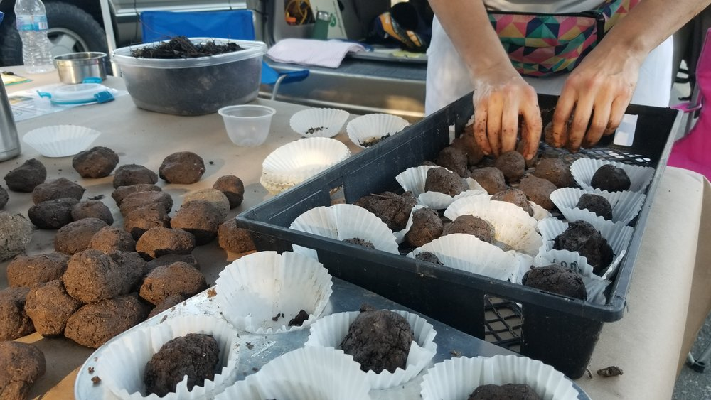 Snappy salad seed bombs made at the Pittsboro Farmers Market on September 6, 2018