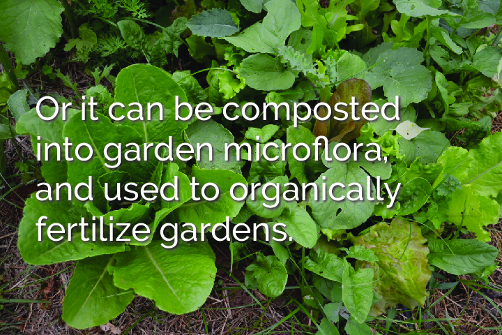 oritcanbecomposted-100.jpg