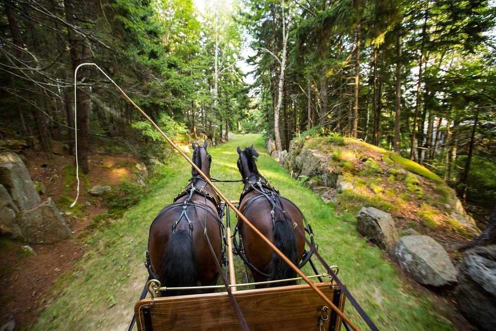 EILEENROCKEFELLER.HORSES.jpg