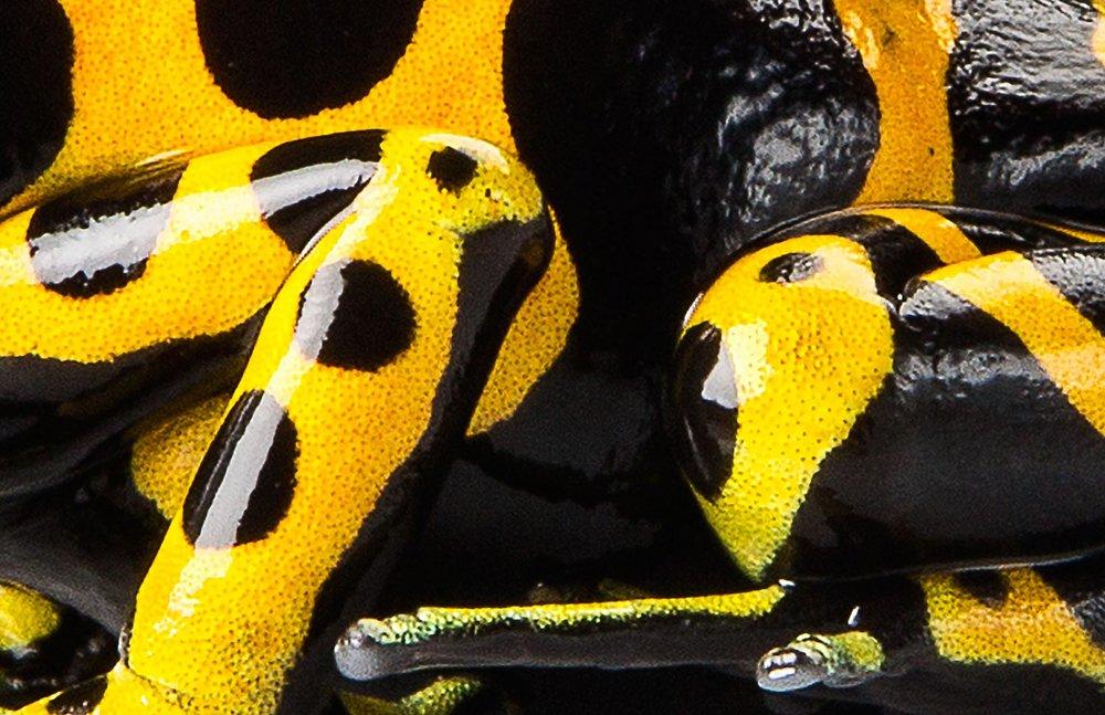 BumblebeeDart-0966_17x11websharp.jpg