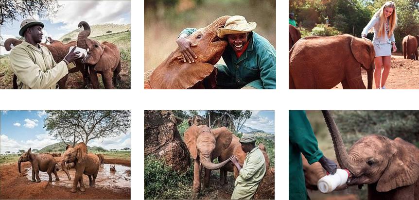 dswt-elephant-orphanage.jpg