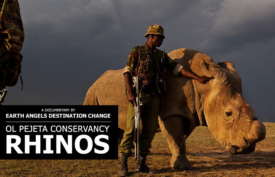 destination-change-rhinos.jpg