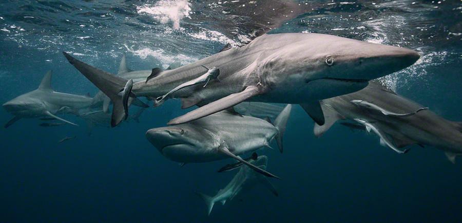 shark7.jpg