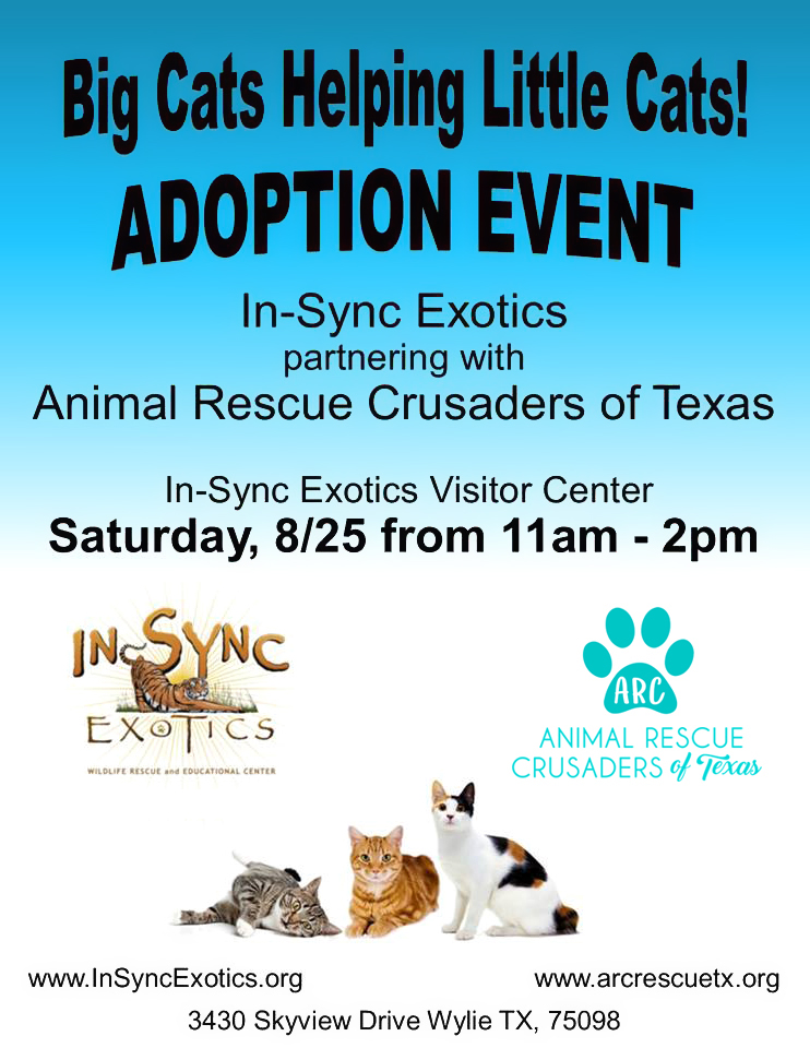 Big Cats Helping Little Cats @ In-Sync Exotics in Wylie