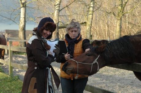 sociale vaardigheden bij paardencoaching.JPG