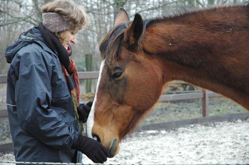 Diep contact in paardencoaching.jpg