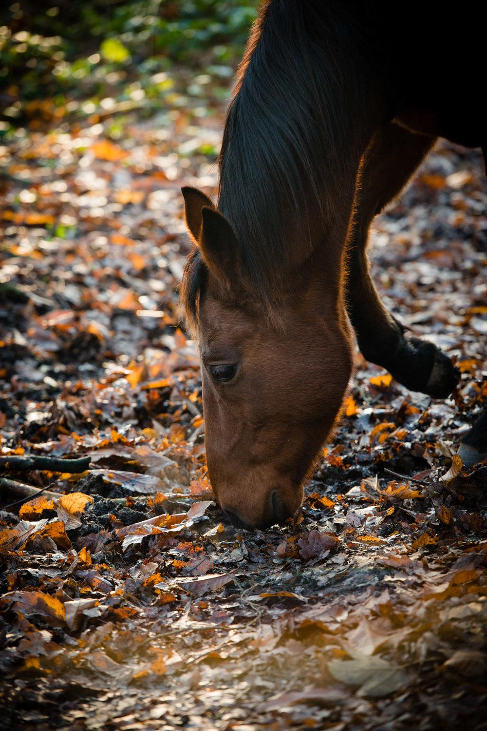 Coaching paard Phebus.jpg