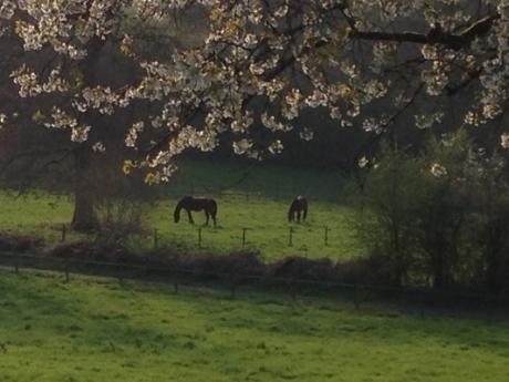 982Coaching paarden in de bloemetjes.JPG