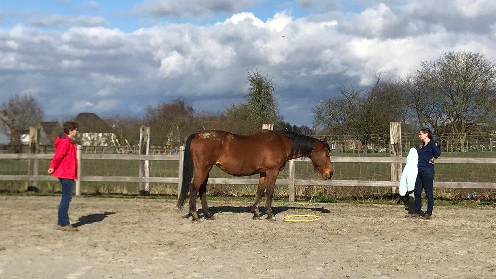 Paardencoaching+opleiding.jpg