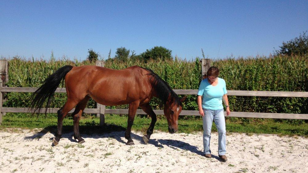 paardencoaching+opleiding+2.jpg