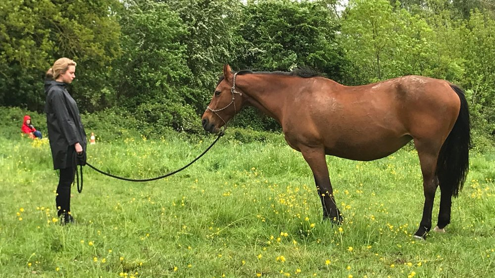 Paardencoaching tegen Burnout JPG