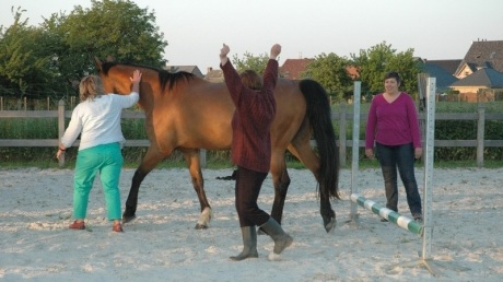 Paardencoaching workshop.jpg
