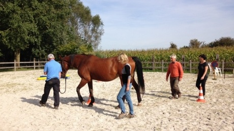 Paardencoaching Mastering Well Being.JPG