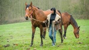 Coaching met paarden.jpg