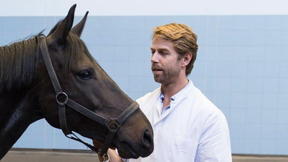 Paardencoaching in gezondheidszorg.jpg