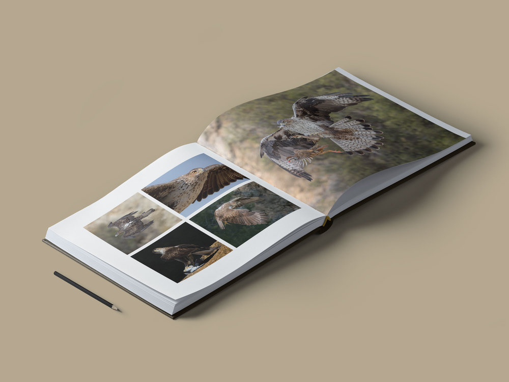 libro-book-inside-interior-photography-fotografia-aguila-perdicera-aquila-fasciata-bonelli-eagle 03