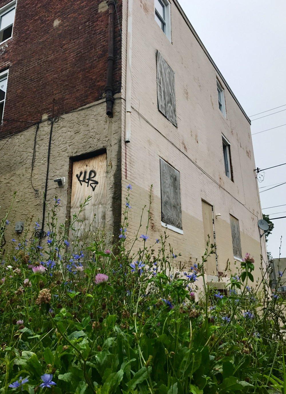 WRhouse_flowers.jpg