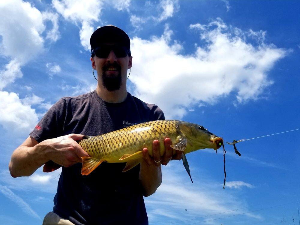 Carroll Creek Carp