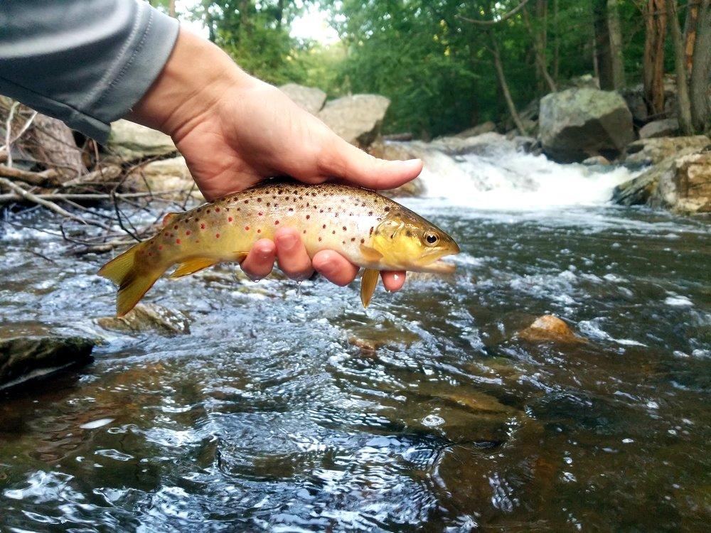 Wild Big Hunting Creek Brown
