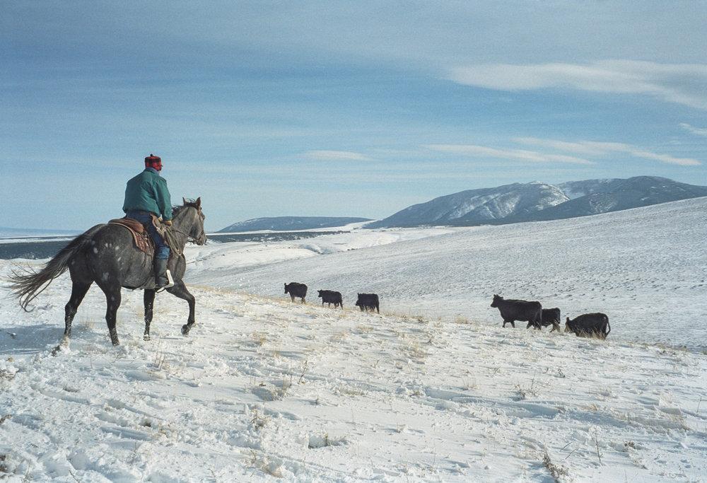 herding037.jpg