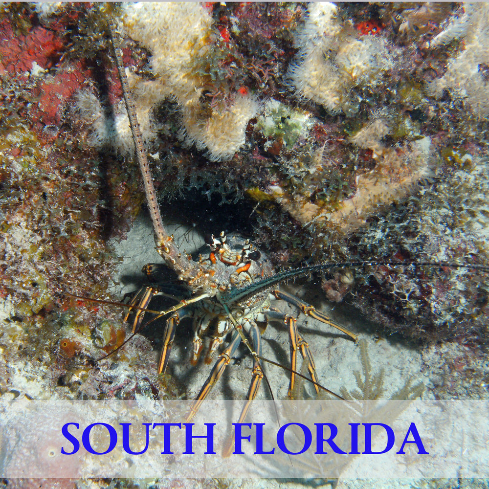 South Florida Lobster Dive Trip, August 8=12, 2019