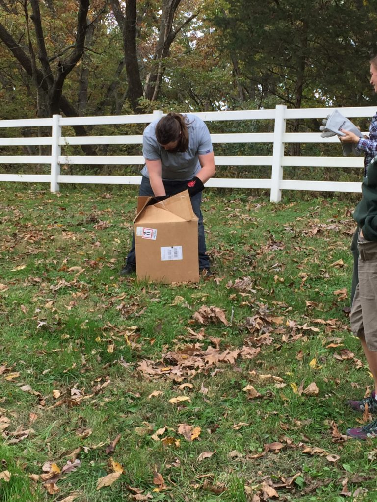 Our raptor rehab volunteer, Eric, opening the box to release the owl.