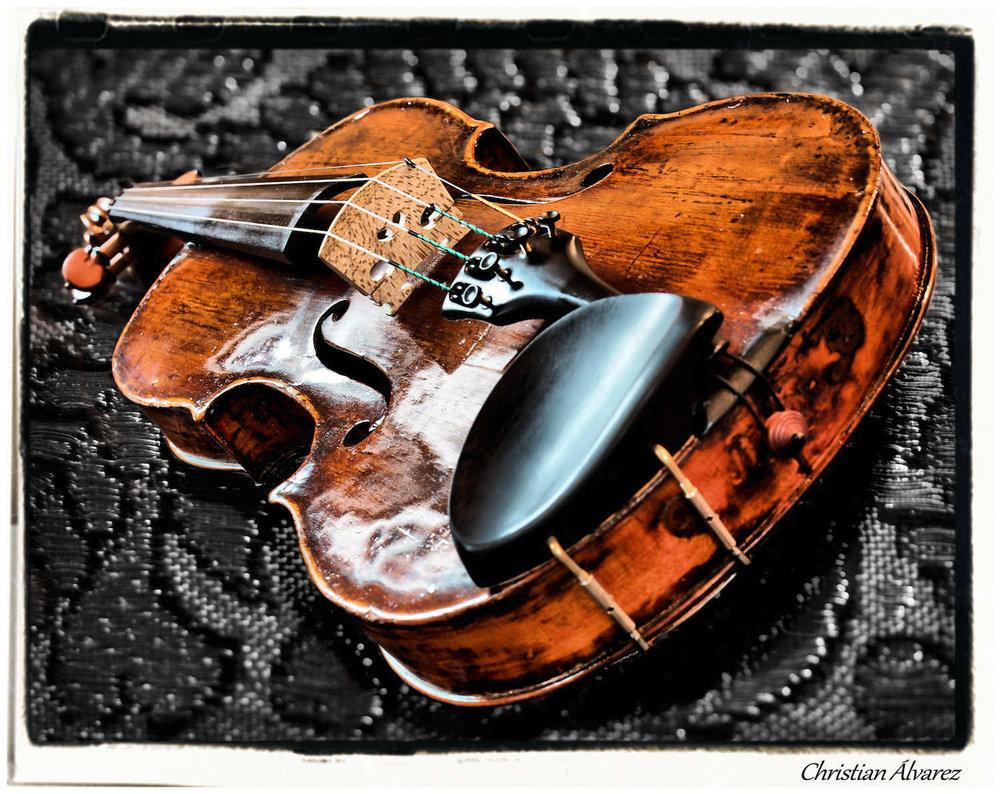 Viola com.jpg