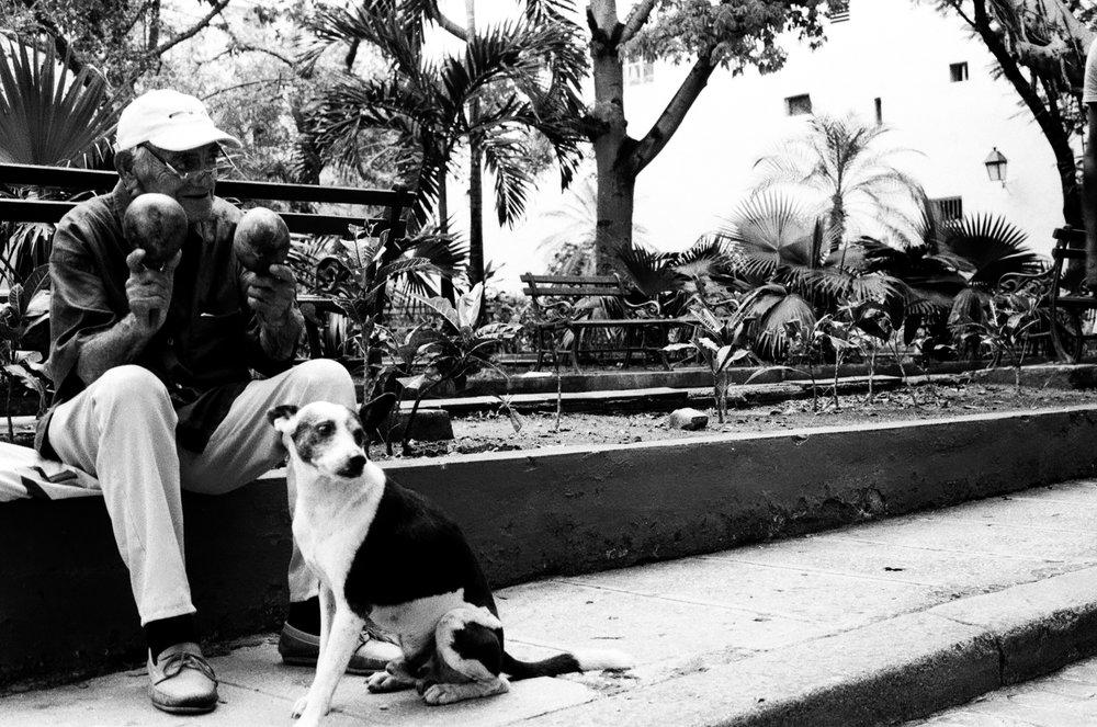 Un autre cubain utilise ses maracas pour faire danser son chien et amuser les passants.