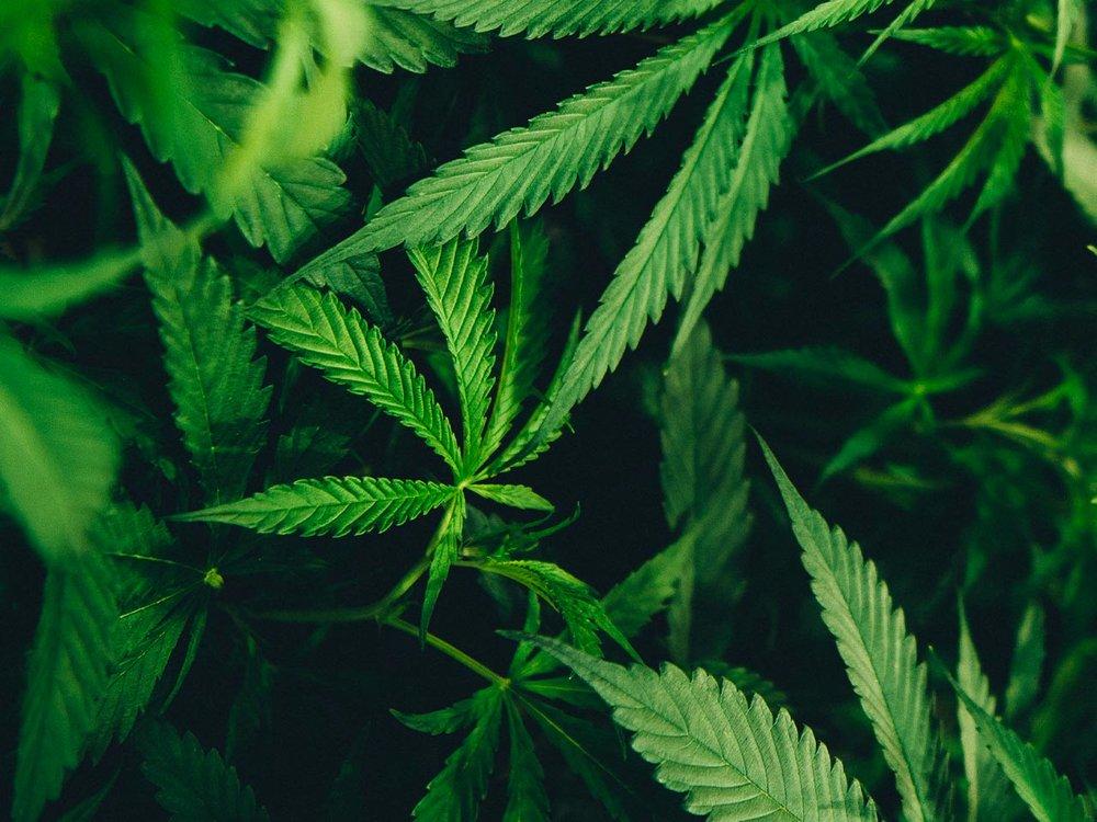 La légalisation du cannabis - Le 21 janvier 2019, les membres du Club Boma France se réunissent pour participer à un grand débat sur la légalisation du cannabis en France.Lire la suite