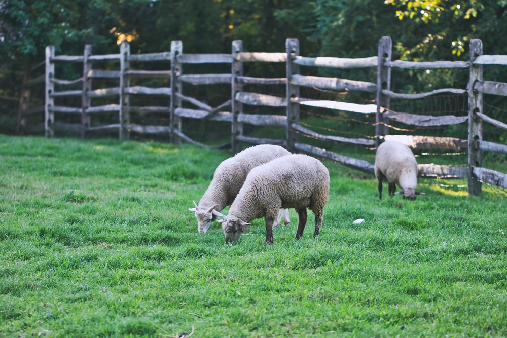 agriculture-animals-countryside-1301866.jpg