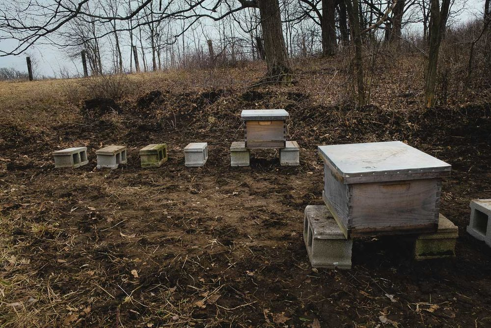 Early in the year, Joel sets up the foundation for ten new hives at Sol Gardens before his shipment of European honeybees arrives from California. After clearing and flattening a space at the edge of a field, beneath trees that will shade the hives and help shelter them from strong winds, he lays out cinder blocks to elevate the hive boxes. This keeps them dry and ventilated, and helps keep out pests like ants and mice.