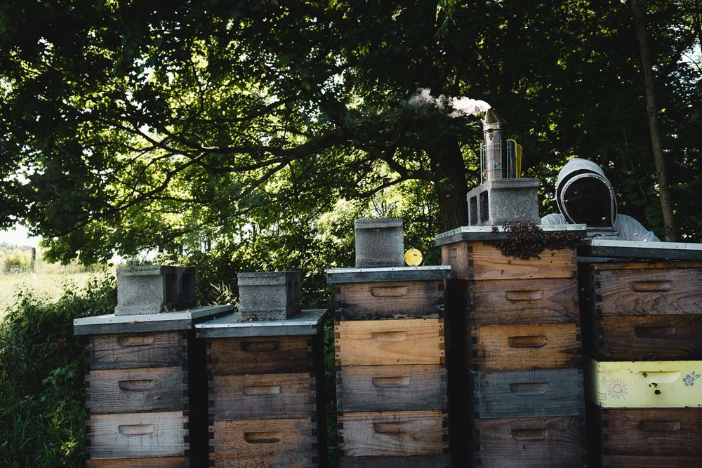 "During the summer, when the hives are well established, the beekeeper only needs to check on the bees every two weeks or so. The hive stacks grow as each hive does—a taller stack means those bees are reproducing faster and making more honey. While he checks the hive on the right, bees cluster, or ""beard,"" on a neighboring box—when asked what the bees were doing, Joel said they're ""clustering until they can return to the hive. Basically, I'm in the damn way."""