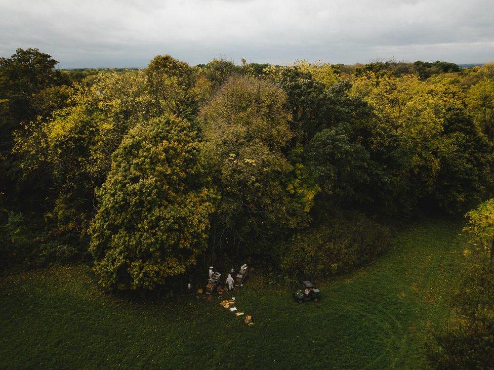 One hour west of Chicago, in Yorkville, Illinois, where suburban yards give way to patchwork fields and farms, the Aurora Bee Company gathers its final honey harvest of 2018. In early October, owner Joel Frieders and his part-time helper, family friend Sebastian Laskowski, pull out bee frames full of honey and tidy the hive stacks, leaving enough honey for the bees to live on until the next spring. This fall harvest was titled Hope, since the previous year's bees didn't make it through the winter.