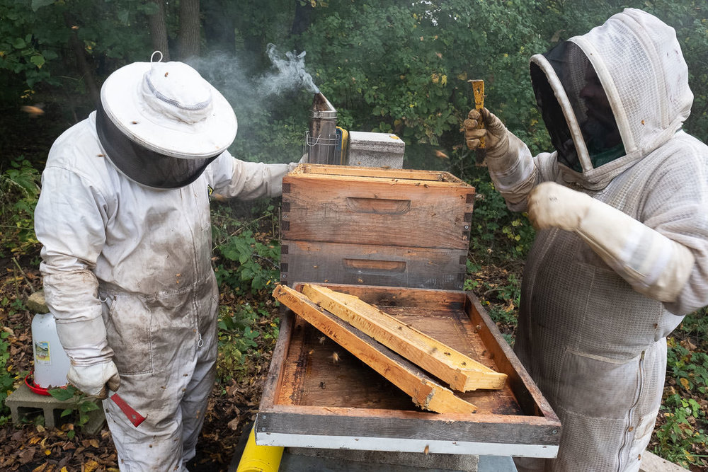 On the final collection day of 2018, Sebastian (left) and Joel in full bee suits calm the bees with smoke, then, holding red and yellow hive tools—used to scrape wax and pry apart the hive boxes and frames—open up the stacks, remove frames full of honey, and check the health of the hive. After this collection, they'll leave the bees alone. Worker bees will kick the drones (males, only needed to fertilize the queen's eggs) out to die, then snug themselves in for the winter and live off their stores of honey.
