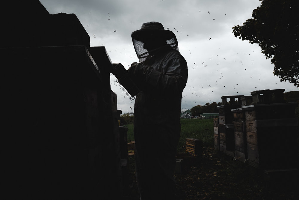 So Many Worlds - Photographer Adrienne Harvey spent a season with the bee keepers of Aurora Bee Company in Northern Illinois. Harvey's project is curated for Confluence Magazine by freelance photojournalist Kristi Odom.