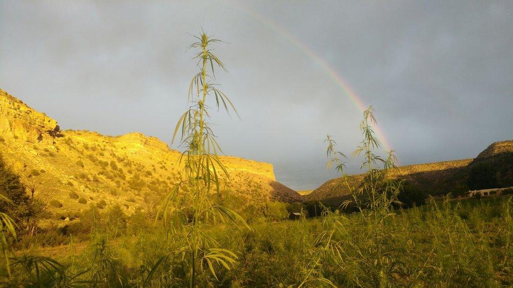 rainbow_hemp_1afe2442-e86f-40f6-a37d-903b1102d1f1.jpg