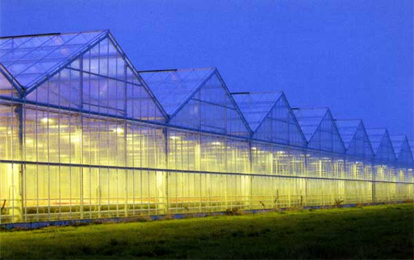 LOHUIS are looking to crack the greenhouse market