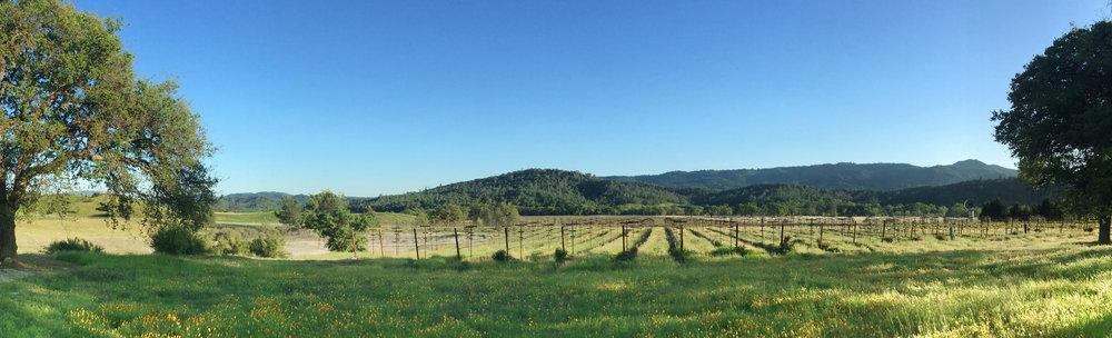 IMG_0093-cadden-vineyard-front.jpg