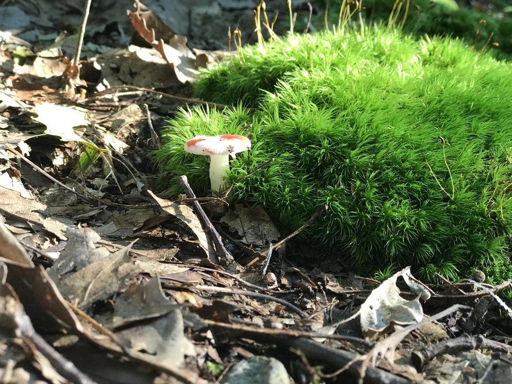 A friendly mushroom on our path.