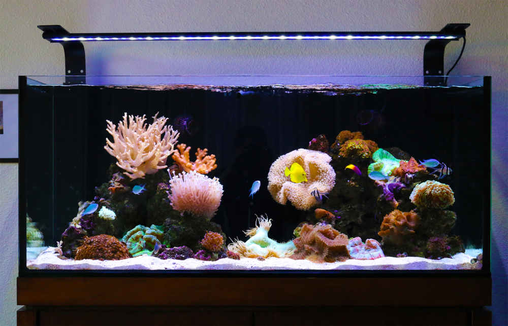 our main saltwater display at the reef outlet in lewisville, tx.