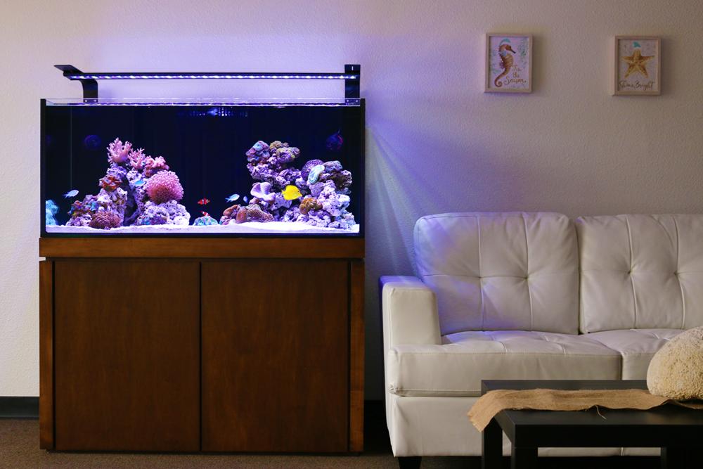 Saltwater Reef -