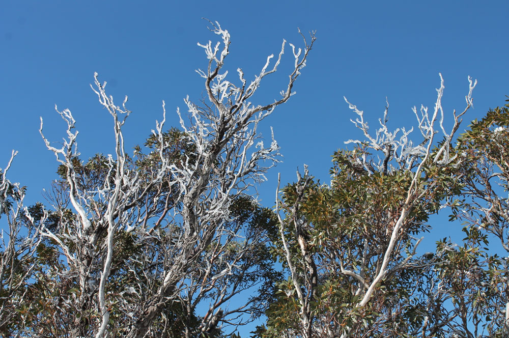 iced-branches-LITE.jpg